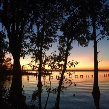 View of St. Johns River from the boarwalk at Walter Jones Historic Park