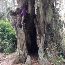 Dalia climbing a tree at Alpine Grove Park along the St. Johns River